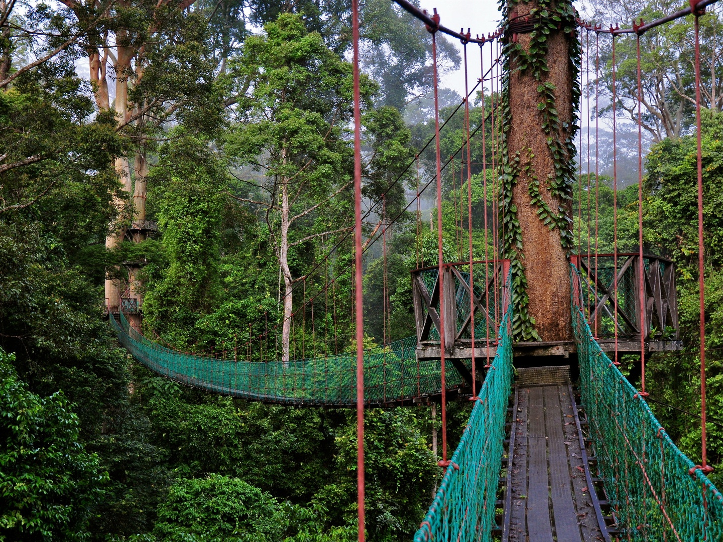 Poring Hot Spring & treetop canopy walk